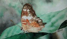 Watercolor by Marisete Fachini Girardello / Farfalla, paper Fabriano