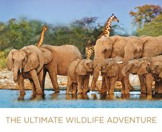 AmaWaterways Africa Safaris - All of our 2016 Africa programs offer the exhilarating thrill of a classic safari with the luxury of an AmaWaterways river cruise — a truly life changing experience. Pair your 4-night wildlife cruise with one of four different, yet equally incredible land programs that take you to explore Africa's most amazing destinations.