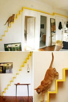 great idea for cat owners who don't like ugly cat furniture. bright yellow color provides a dramatic accent Pet Furniture, Unique Furniture, Inexpensive Furniture, Cat Walkway, Cat Climbing Wall, Cat Stairs, Diy Cat Tree, Cat Trees, Cat Playground