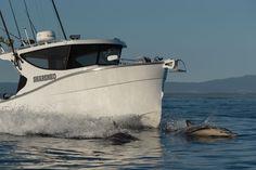 HERLEY BOATS - Premium Customise Boats - Herley Captain Bait Tank, The Wheelhouse, Small Yachts, Under Decks, Underwater Lights, Timber Deck, Aluminum Boat, Roof Rails, Sport Fishing