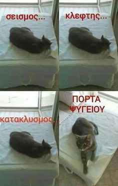 Funny Greek Quotes, Greek Memes, Funny Quotes, Very Funny Images, Funny Pictures, Animal Memes, Funny Animals, Adorable Animals, Funny Vid