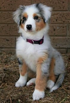 Beautiful and lovely dog #puppy #pets   https://biopop.com/