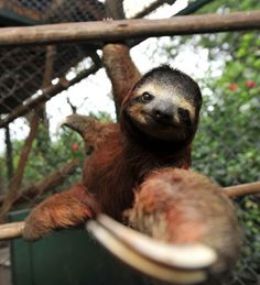 """Sloth it to me, baby."""