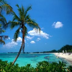 Bimini Island  the Bahamas