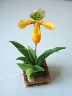 The name of this Lady slipper orchid is Paph.Exul and it is made out of Japanese Luna clay.    You might also like: Rose - Miniature Thai ...