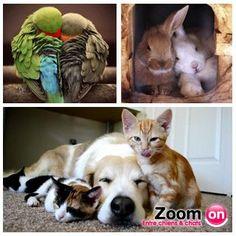 #ZoomOn vous fais partager un moment de tendresse. Vous aimez les animaux ?  Venez nous rejoindre sur http://www.facebook.com/ZoomOnEntrechiensetchats