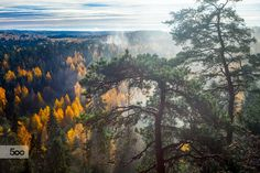 Dramatic HDR landscape with trees and forest in autumn. Autumn colors shining and mist rising from foggy forest of Aulanko Nature Park in Finland.