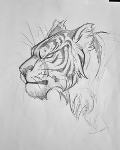 I'm Patti ♀️ and from Germany💕 Just someone who has a addiction to draw :) Sketches, Animal Drawings, Cool Art Drawings, Animal Sketches, Animal Drawings Sketches, Tiger Drawing, Drawing Sketches, Cat Drawing, Big Cats Art