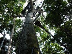 Un ascenso a las copas de los árboles en #Leticia #Amazonas. #FotoDelDia EnMiColombia.com
