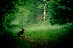 Jeannot Lapin by James Rignault on 500px