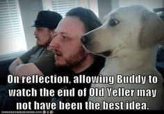 Funny pics of puppies poor old yeller :(