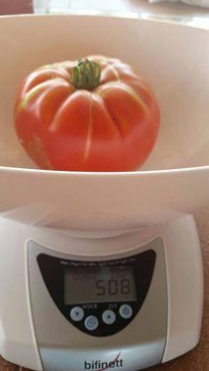 Menudo Tomate 5,08 Gramos Cor de Bou