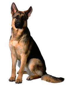 En voor mezelf een grote stoere waakhond!!!