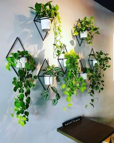 50 Ways To Display Plants and Flowers in Your Home These trendy Planters ideas would gain you amazing compliments. Check out our gallery for more ideas these are trendy this year. display ideas 50 Ways To Display Plants and Flowers in Your Home Indoor Plant Wall, Plant Wall Decor, House Plants Decor, Indoor Plants, Hanging Plant Wall, Wall Mounted Planters Indoor, Hang Plants On Wall, Plants On Walls, Indoor Living Wall