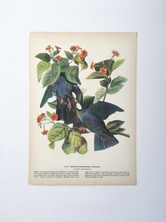 A personal favourite from my Etsy shop https://www.etsy.com/uk/listing/492478976/plate-177-original-1937-book-plateprint