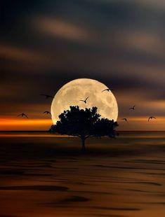 Moon Photography, Landscape Photography, Gothic Fantasy Art, Love Moon, Halloween Moon, Shoot The Moon, Good Night Moon, Meteor Shower, Beautiful Moon