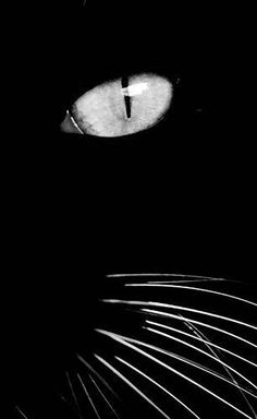 grogeous photo of black cat face, white shiskers, yellow eye Beautiful Cats, Animals Beautiful, Cute Animals, Crazy Cat Lady, Crazy Cats, I Love Cats, Cool Cats, Regard Animal, Photo Chat