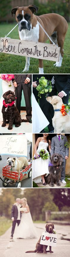 oh my God, have the dog with the sign walk down the aisle right before the bride! i would die of cuteness