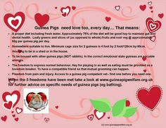 Guinea pigs need love every day! Baby Guinea Pigs, Guinea Pig Care, Dumb Animals, Starting A Farm, Raising Farm Animals, Need Love, The Way Home, Proper Diet, Dental Health