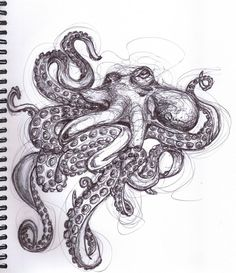 Drawing 11 of my 50 day challenge :D requested by a friend #50daychallenge  Jaime Quinn art drawing octopus