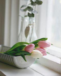 Dutch Tulip, Marianne Williamson, Pink Tulips, Rose, Garden, Flowers, Plants, Cottage, Pink