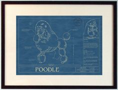 Poodle Blueprint from Animal Blueprint Company on Simply Stated