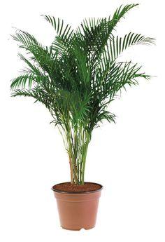 Plantas que puedes tener en el interior.