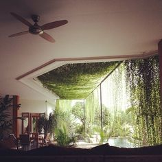 In love with this living plant curtain concept!