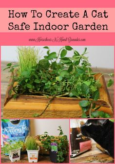 1000 images about dogs cats on pinterest healthy dog for Indoor gardening with cats