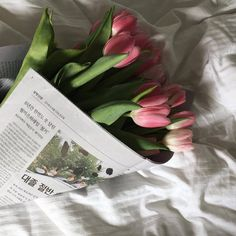 pin: @fabxiety (͡° ͜ʖ ͡°) My Flower, Flower Power, Beautiful Flowers, Plants Are Friends, Flower Aesthetic, Planting Flowers, Flower Arrangements, Bloom, Cactus