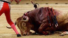Mexico - Ban bullfighting in the state of Durango.
