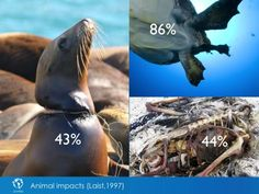Some examples of the harm done by plastics to our marine wildlife