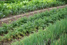 Gemüsegarten im Mai – 5 Aufgaben