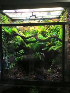 Terrariums, Gecko Terrarium, Terrarium Reptile, Aquarium Terrarium, Garden Terrarium, Reptile Room, Reptile Cage, Reptile Enclosure, Les Reptiles