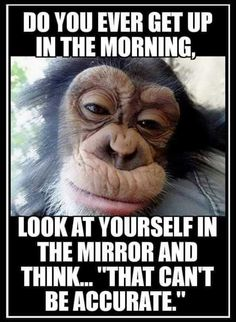 good morning quotes funny * good morning quotes + good morning + good morning quotes for him + good morning quotes inspirational + good morning wishes + good morning beautiful + good morning quotes funny + good morning greetings Funny Shit, Haha Funny, Funny Jokes, Hilarious, Funny Monkey Memes, Monkey Humor, Funny Monkey Pictures, Funny Stuff, Funny Life