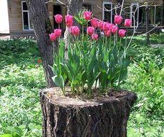 Tens uma árvore de grande porte seca no jardim e não sabes o que lhe …