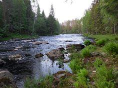 Vekarus, Tuupovaara, Pohjois-Karjala, 2014