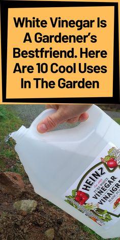 Backyard Vegetable Gardens, Veg Garden, Vegetable Garden Design, Garden Pests, Garden Care, Edible Garden, Lawn And Garden, Garden Fun, Growing Plants
