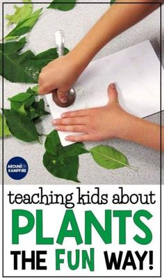 Plant life cycle activities: Find creative, hands-on plant life cycle activities and experiments for teaching kids about chlorophyll, pollination, germination, and seed dispersal the fun way! Ideal for and graders learning about the life cycle of plants. Plant Crafts, Plant Projects, Plants 3rd Grade, Tree Life Cycle, Life Cycle Of Plants, Teaching Activities, Teaching Kids, Sequencing Activities, Science Worksheets