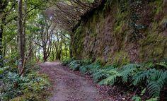 Koe Teneriffa uudella tavalla - 3 vinkkiä vaelluslomalle Country Roads, Plants, Teneriffe, Plant, Planets
