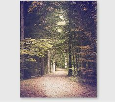 Forest Landscape Photo landscape photography by semisweetstudios