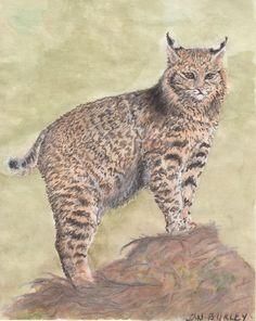 """""""Cat-itude"""" original watercolor by Jan Burley"""