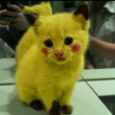 Pikachu cat? Lol.