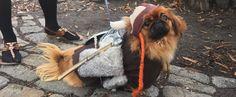 20 Epic Costume Ideas From New York's Legendary Halloween Dog Parade