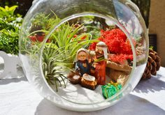 Items similar to Manger Scene Terrarium - Large Round Glass Globe Terrarium Kit with 2 Air Plants - Mary Joseph and Jesus - Driftwood - Moss - Christmas on Etsy Christmas Vases, Christmas Plants, Christmas Figurines, Christmas Nativity, Christmas Art, Christmas Projects, Handmade Christmas, Christmas Decorations, Beach Themed Art