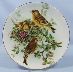 John Gould's Birds of Great Britain: The Green Finch - Coalport