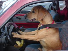 going shopping for doggie bones