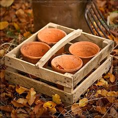 Mabel & Rose - Vintage garden and country living Wooden Tool Boxes, Autumn Leaves, Autumn Fall, Garden Pots, Garden Ideas, Flower Pots, Flowers, Autumn Garden, Diy Clay