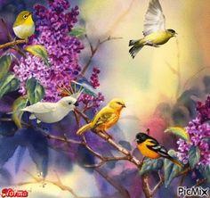 ♥♥Pássaros♥♥