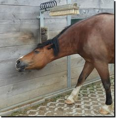 That's why we've distributed brushes and scouring pads around the stable. ein kleiner Laufstall in Gauting / Hausen Horse Paddock, Horse Stables, Horse Farms, Dream Stables, Campolina, Horse Tack Rooms, Horse Barn Plans, Horse Shelter, Horse Ranch